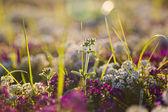 красивые весенние цветы — Стоковое фото