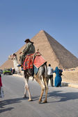 Horse and camel riders in Egypt — Stockfoto
