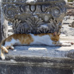 Efes — Fotografia Stock  #51161589