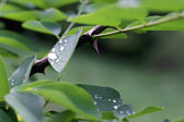 Water drop on the green leaves after rain — Stockfoto