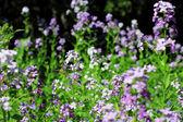 夏の山草原の上を飛んで緑蝶 — ストック写真