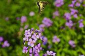 夏の山草原の上を飛んで黄色の蝶 — ストック写真