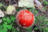 Red poisoned mushroom growing in the summer forest — Stock Photo