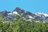 Snowy caucasus mountains and green forest under — Foto de Stock