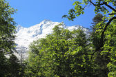 Snowy caucasus mountains and green forest under — Stock Photo