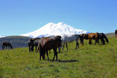 Horses on the summer autumn caucasus meadow — Stock Photo
