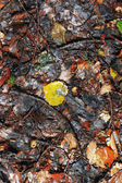 Yellow fallen autumn leaves on the ground — Stock Photo