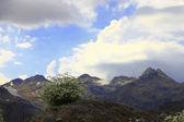 Kaukasus berglandschaft und bush von camomiles — Stockfoto