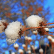 Flower with a pins under the snow against blue sky — Stock Photo #38628903