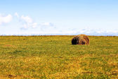 Straw roll bale on the field of farmland — Stock Photo