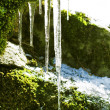 Stock Photo: Frozen icicles hanging from the stone in the forest