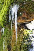 Frozen icicles hanging from the stone in the forest — Stok fotoğraf