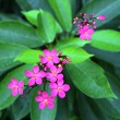 Stock Photo: Exotic pink flower blooming on branch of bush