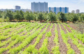 Seedbeds in urban garden — Stock Photo