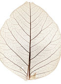 Tree leaf close up — Stock Photo