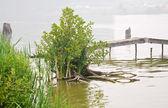 烟雾下市池塘在夏季的一天 — 图库照片