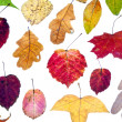 Leaf fall from multicolored autumn leaves - Stock Photo
