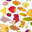 Many deciduous autumn leaves — Stock Photo