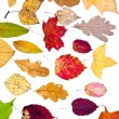 Foto Stock: Many loose autumn leaves