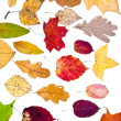 Many loose autumn leaves — Zdjęcie stockowe #13537728