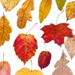 Deciduous autumn leaves — Stockfoto #13537732