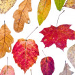 Manycolored autumn leaves — Stock Photo
