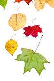Yaprak döken huş kavak akçaağaç ve birçok sonbahar yaprakları — Stok fotoğraf