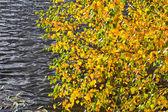 Gri nehri altında sonbahar yaprakları — Stok fotoğraf