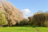 ängen bana väg genom hösten skogen gränsar — Stockfoto