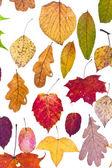 Loose autumn leaves — Stock Photo