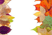 Two side natural frame from autumn leaves — Stock Photo