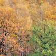 Colorful autumn forest - Stock Photo