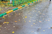 Falled leaves on wet urban road — Stock Photo