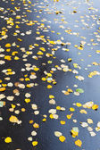 Många falled blad på våt asfaltväg — Stockfoto