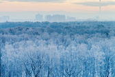 Blue sunrise in very cold winter early morning — Stock Photo