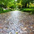 Stock Photo: Wet cobble stone path in parco dell arena, Padua