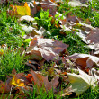 Stock Photo: Autumn leaves in green grass