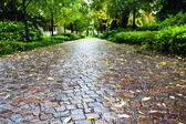 Wet cobble stone path in parco dell arena, Padua — Stock Photo