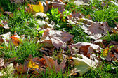 Autumn leaves in green grass — Stock Photo