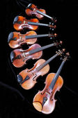 Family of different sized fiddles on black — Stock Photo