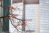 Autumn leaves on urban tree — Stock Photo