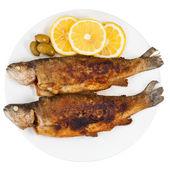 Fritto di pesce trota di fiume su sfondo bianco — Foto Stock