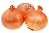 Three onion bulbs — Stock Photo