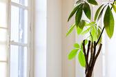 Houseplant in white flat — Stockfoto