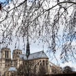 Tree branch and Notre-Dame de Paris - Stock Photo