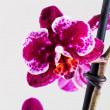 Stock Photo: Orchid flower close up