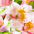 Stock Photo: Flowers bunch from pink alstroemeria