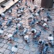 Stock Photo: Urbpigeons