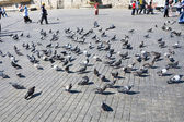 Doves on old square in Istanbul — Stock Photo