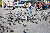 Boy feeds doves on old square — Foto de Stock